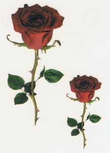Red Roses temporary tattoo   (401)