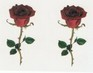 Red Roses temporary tattoo - 402